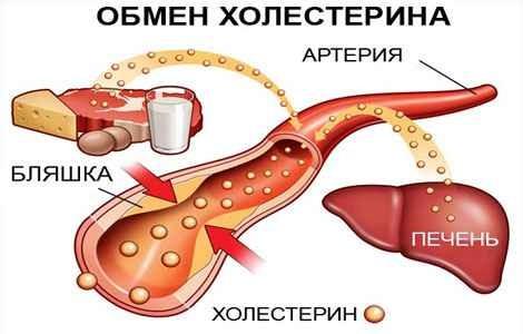 Препараты при повышенном холестерине и триглицеридах