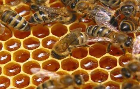 Пчелиный подмор