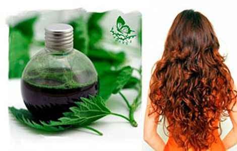 Как полоскать волосы крапивой