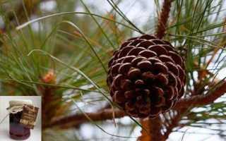 Настойка из сосновых шишек — применение