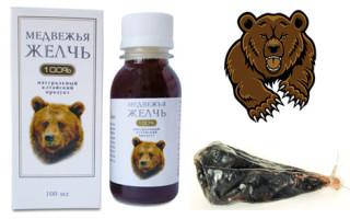 Медвежья желчь применение и противопоказания