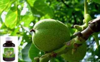 Настойка на зеленых грецких орехах