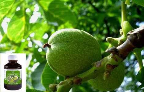 Настойка зеленого ореха противопоказания